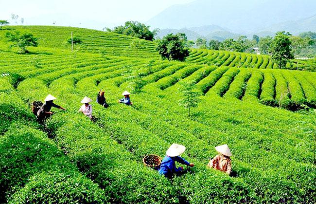 Hành trình du lịch Tuyên Quang